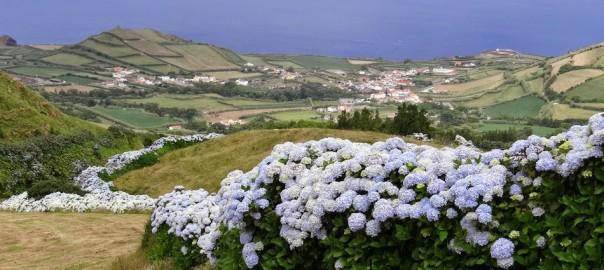 10. Hortensii in Azore